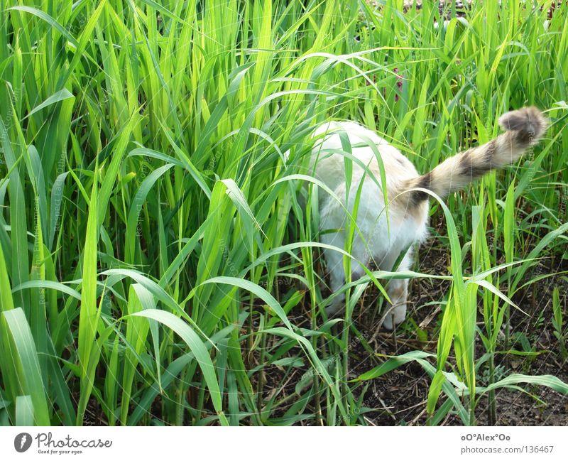 suchend Katze grün Tier Gras Frühling Sträucher Suche Hinterteil