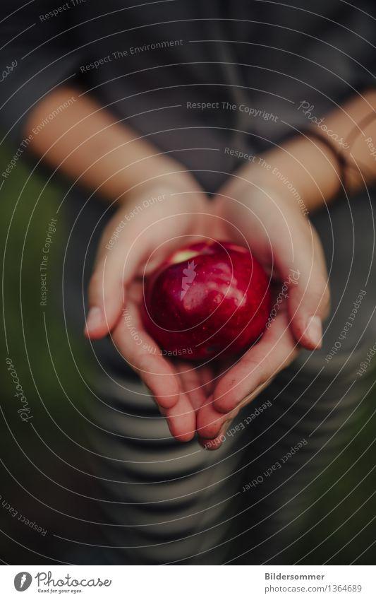 Macoun Lebensmittel Frucht Apfel Ernährung Bioprodukte Diät Hand Finger 1 Mensch Sommer Herbst Garten frisch glänzend lecker saftig grün rot Apfelernte Ernte