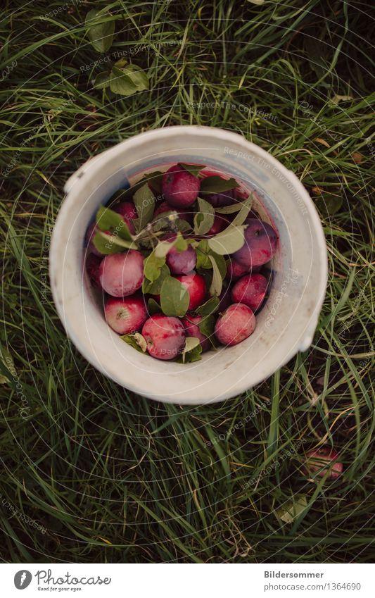 more Äppels Frucht Apfel Ernährung Bioprodukte Natur Gras Garten Wiese Essen frisch lecker saftig süß grün rot Apfelernte Ernte Apfelbaum pflücken Eimer