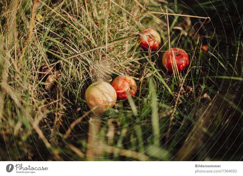 . Lebensmittel Frucht Apfel Ernährung Bioprodukte Natur Sonne Sommer Herbst Schönes Wetter Gras Garten Wiese genießen Gesundheitswesen Wachstum Apfelernte Ernte