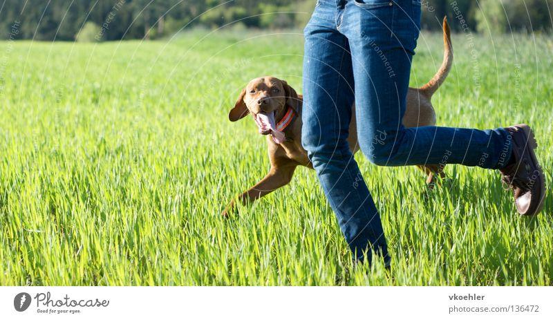 laufen, laufen, laufen,... Hund Freude Wiese Bewegung Beine Freundschaft laufen rennen Fitness Partner Säugetier Mensch