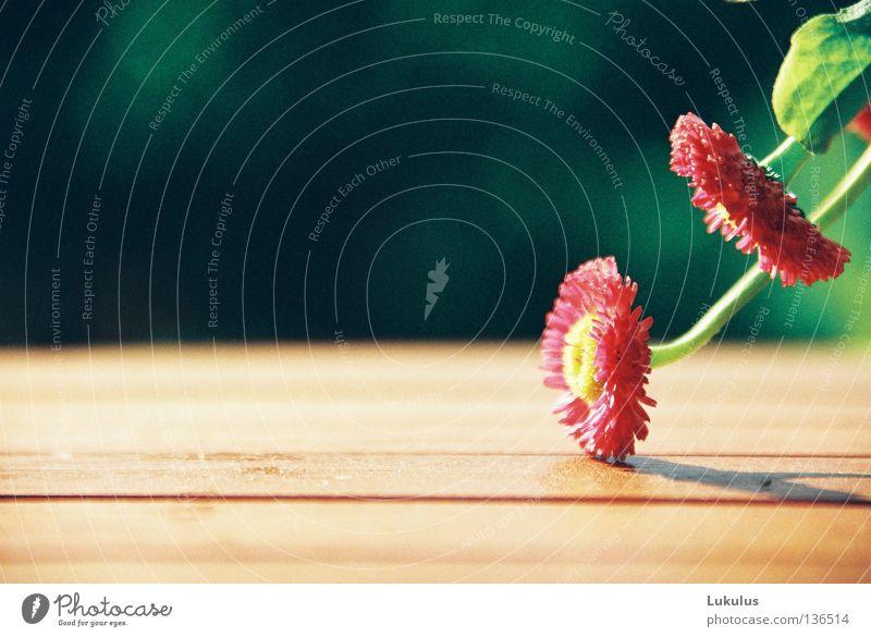 Kopf nicht hängen lassen alt Blume grün rot gelb Blüte Holz Wärme Tisch Pause zart Müdigkeit