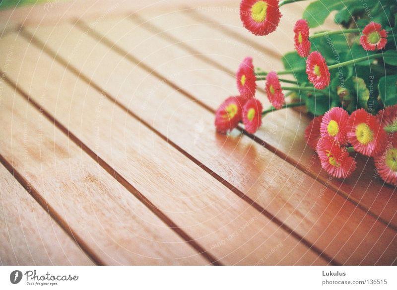 Kopf nicht hängen lassen 2 Blume grün gelb Blüte Holz braun Nebel Tisch feucht