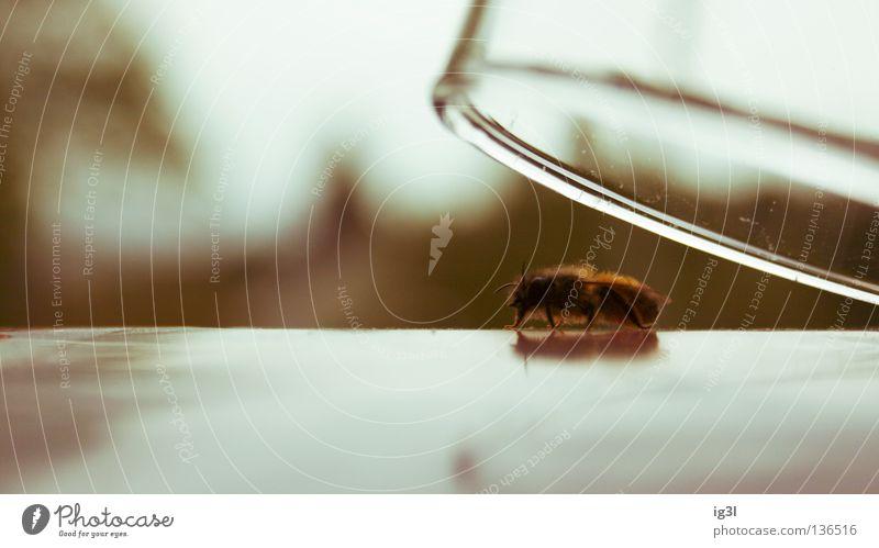 Hafturlaub Natur grün Einsamkeit Tier Freude dunkel Gefühle Tod fliegen Angst Kraft Lebensfreude Sicherheit Lebewesen festhalten Vertrauen