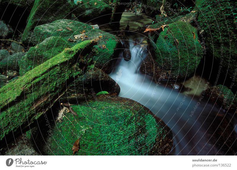 Ein Tag im Wald Bach Langzeitbelichtung mystisch Fantasygeschichte grün Stimmung Wasser Fluss