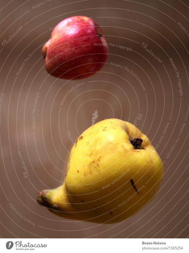 ff - flying fruit Natur Pflanze schön rot gelb Leben Sport Gesundheit außergewöhnlich fliegen Lebensmittel braun Frucht Ernährung Geschwindigkeit genießen