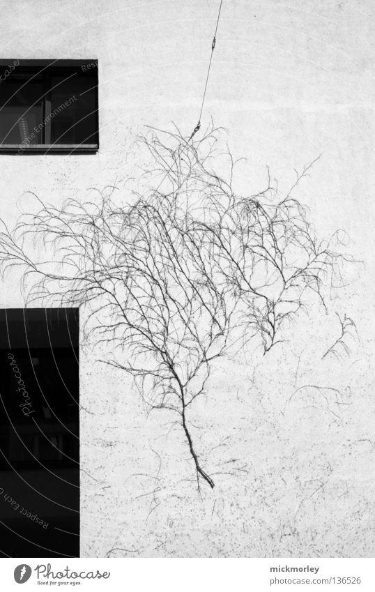 Another Tree on the Wall Baum Wand Sträucher Fenster wirklich Straßenkunst schwarz weiß Einfluss Reifezeit Lebensraum Natur Verkehrswege tree window reality