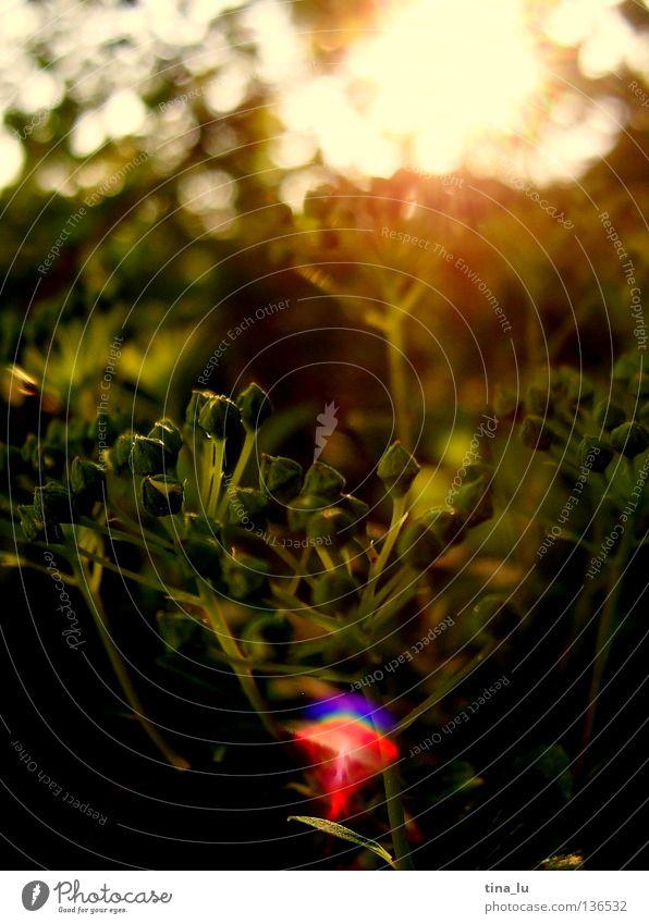Abendstimmung [detail] Abendsonne glänzend Physik heizen Blatt Sträucher Baum rot Frühling Sommer Herbst brennen Am Rand Ecke glühen Sehnsucht mehrfarbig