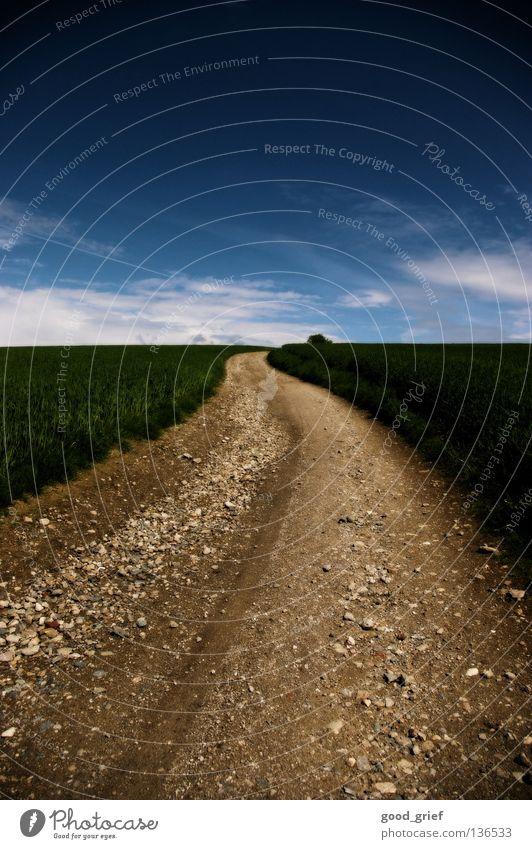 road in the sky Himmel grün blau Wolken Wiese Gras Berge u. Gebirge Stein Wege & Pfade Feld dreckig Erde Frieden aufwärts Schönes Wetter Kies