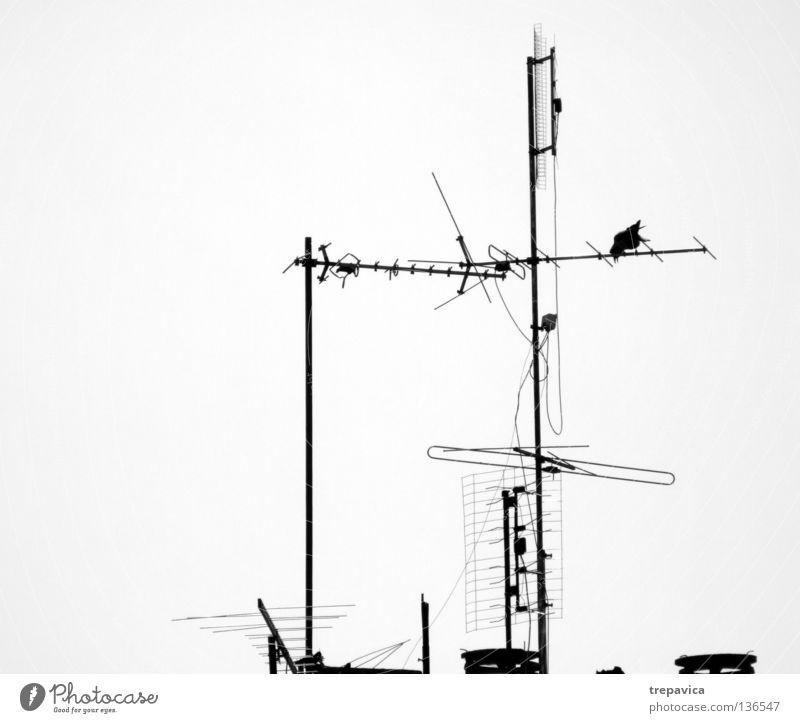 antenne Baum Haus Metall Wellen Horizont Vogel Dach Fernsehen Antenne Schwarzweißfoto Signal Rabenvögel Dachantenne