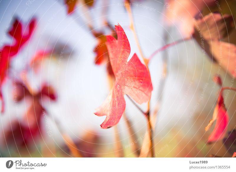 Der Sommer neigt sich dem Ende Umwelt Natur Landschaft Pflanze Himmel Wolkenloser Himmel Herbst Klima Schönes Wetter Blume Sträucher Blatt Blüte Grünpflanze