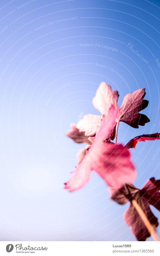 Herbst, meine Lieblingsjahreszeit Umwelt Natur Landschaft Pflanze Himmel Wolkenloser Himmel Sonne Sonnenlicht Sommer Schönes Wetter Blatt Grünpflanze blau