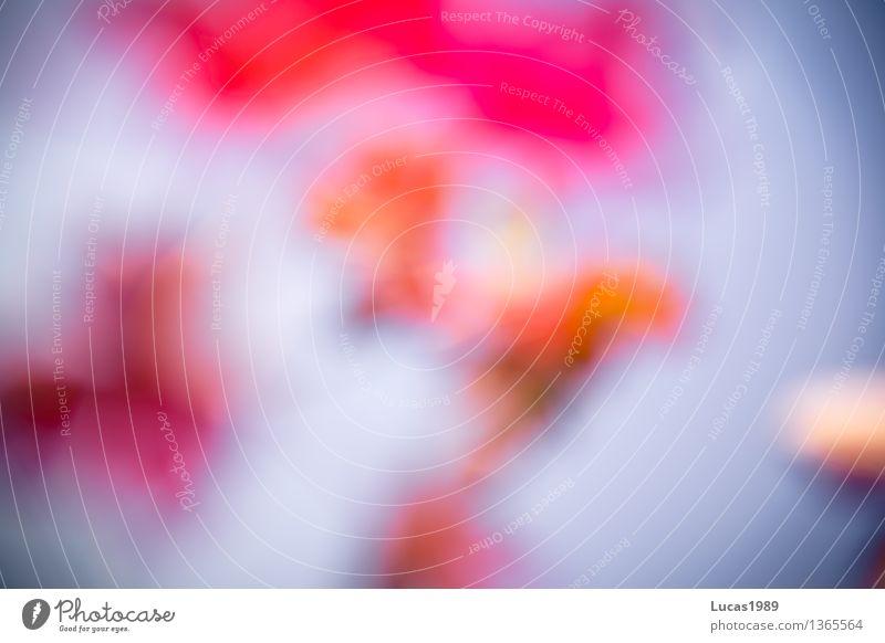 Verschwommene Farben - Herbst Umwelt Natur Landschaft Pflanze Himmel Wolkenloser Himmel Schönes Wetter Blume Sträucher Blatt blau mehrfarbig gelb violett orange