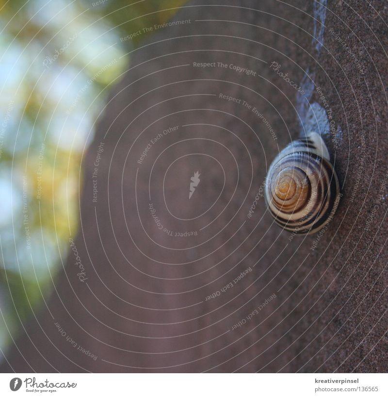 schneckenhäuschen Natur grün blau Tier Stein braun Schnecke Halt Spirale hängend Schneckenhaus Schleim Schleimspur Schneckenschleim