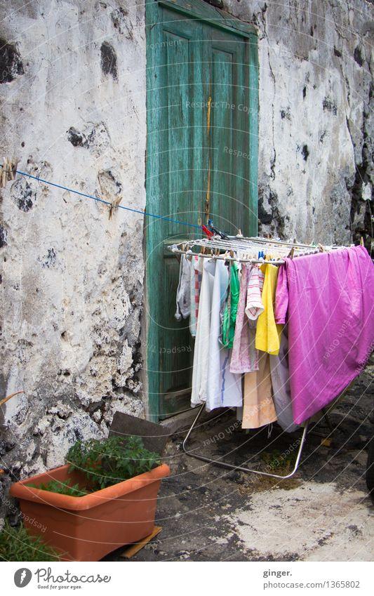 Wäsche ist fertig Pflanze grün Wand grau Stein rosa Tür Seil trocken Loch Wäscheleine unberührt praktisch
