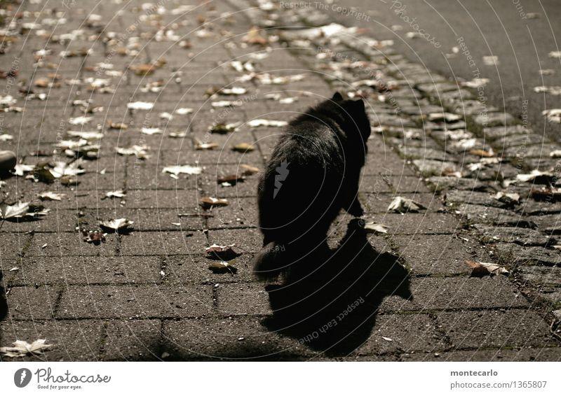 freitag der 13 Umwelt Natur Erde Sonnenlicht Herbst Blatt Tier Haustier Wildtier Katze bedrohlich dunkel dünn authentisch elegant kalt lang natürlich trocken