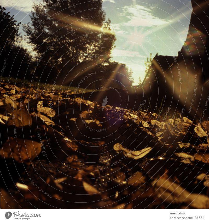 Käfermorgen Froschperspektive unten Blatt Morgen aufgehen Sonnenaufgang braun Herbst Stimmung Beleuchtung Osten analog schön Eindruck Gefühle Jahreszeiten Wärme