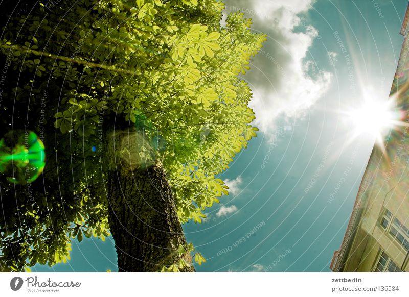 Durchbruch Licht Sonnenlicht blenden Gegenlicht strahlend Korona Baum Baumstamm Blatt Wolken Haus Fassade Fenster Frühling Blüte Sommer Froschperspektive schön