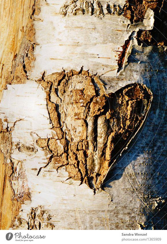 Baumherz Umwelt Natur Holz Zeichen Herz Sympathie Liebe Verliebtheit Romantik Farbfoto Außenaufnahme abstrakt Muster Strukturen & Formen Menschenleer Tag