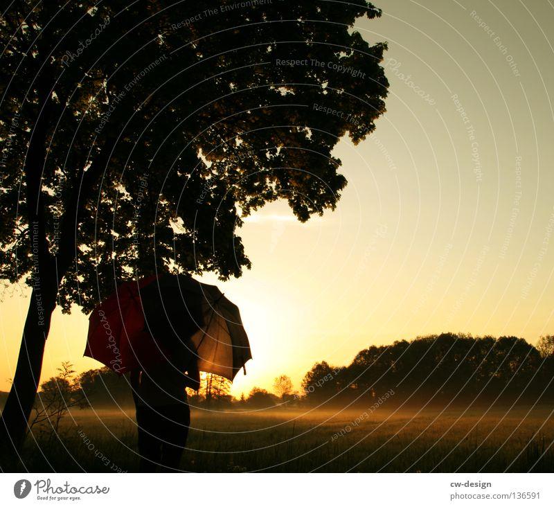 FRÜHAUFSTEHER I Feld Wiese Nebel Regenschirm Sonnenschirm Mann Gras Grasbüschel Baum Wald Morgen Tau Wassertropfen Schweben rot weiß Halm Pflanze feucht nass