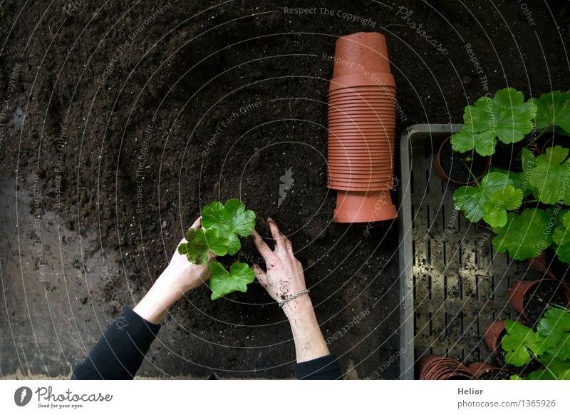 Gardening indoor 2 heimwerken Garten Arbeit & Erwerbstätigkeit Handwerker Gartenarbeit Werkzeug Junge Frau Jugendliche Arme 1 Mensch Erde Pflanze Blume