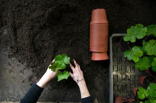 Gardening indoor 2 Mensch Jugendliche Pflanze grün Junge Frau weiß Blume Hand schwarz grau Garten braun Arbeit & Erwerbstätigkeit Erde Arme Kunststoff