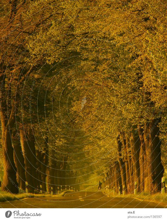 unter kronen radeln pt.2 Baum Baumkrone Allee aufgereiht Blatt Geäst Stimmung Verkehrswege Reihe Natur Straße Niveau Ast Linie Kurve Fahrradfahren