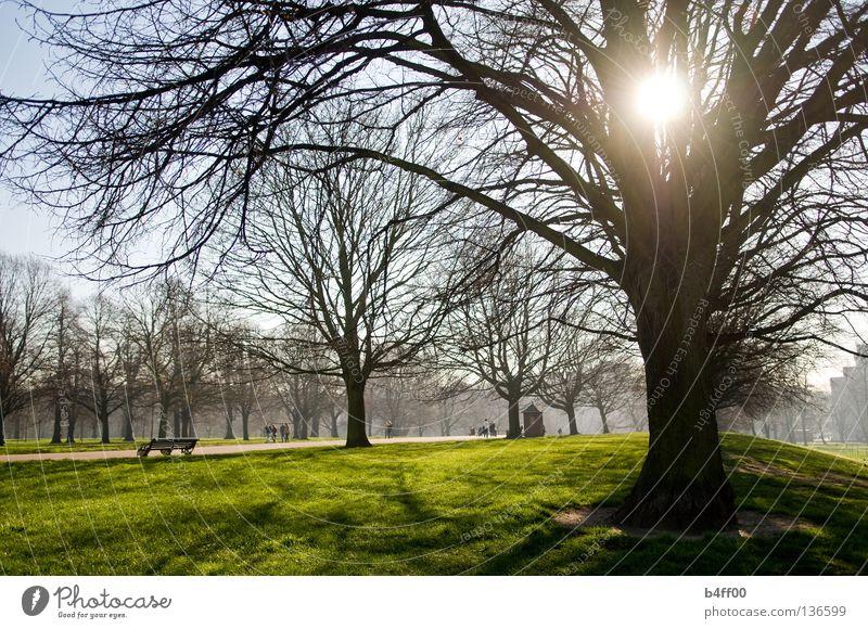 Gegenlichtpark Park Morgen verschlafen Nebel Wiese frisch grün saftig Stadtzentrum Gras Baum ruhig Menschenleer Einsamkeit Frieden Garten leicht neblig
