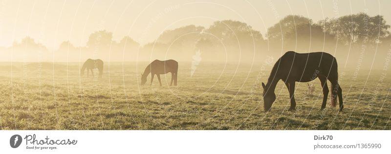 700! Am (vorläufigen) Ende einer langen Reihe ... Freizeit & Hobby Reiten Landwirtschaft Forstwirtschaft Sonnenlicht Herbst Schönes Wetter Nebel Gras Sträucher