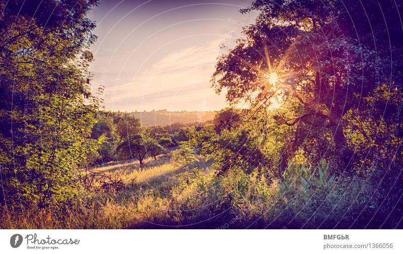 Naturidyll Pflanze schön Sommer Baum Landschaft ruhig Tier Wiese Gras natürlich Garten Park Zufriedenheit Feld Sträucher