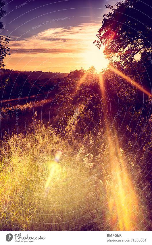 Romantik Wärme Frieden Himmel Natur Ferien & Urlaub & Reisen schön Sommer Sonne Baum Landschaft ruhig Umwelt Gefühle Wiese Gras natürlich Glück