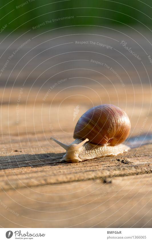 Schneckentempo Ernährung Weinbergschnecken Umwelt Tier 1 Zeichen Sicherheit Schutz Gelassenheit geduldig Schneckenhaus zurückziehen Vertrauen hervorwagen