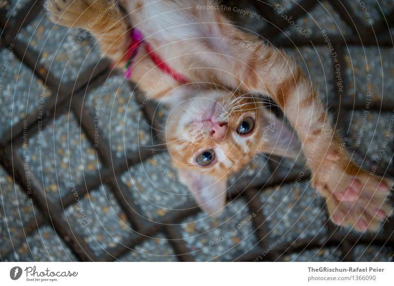 Hi 5 Tier Haustier Katze 1 Tierjunges braun orange rosa schwarz silber weiß Miau Ohr Pfote Auge niedlich Spielen spielerisch Jugendliche Kuscheln Farbfoto