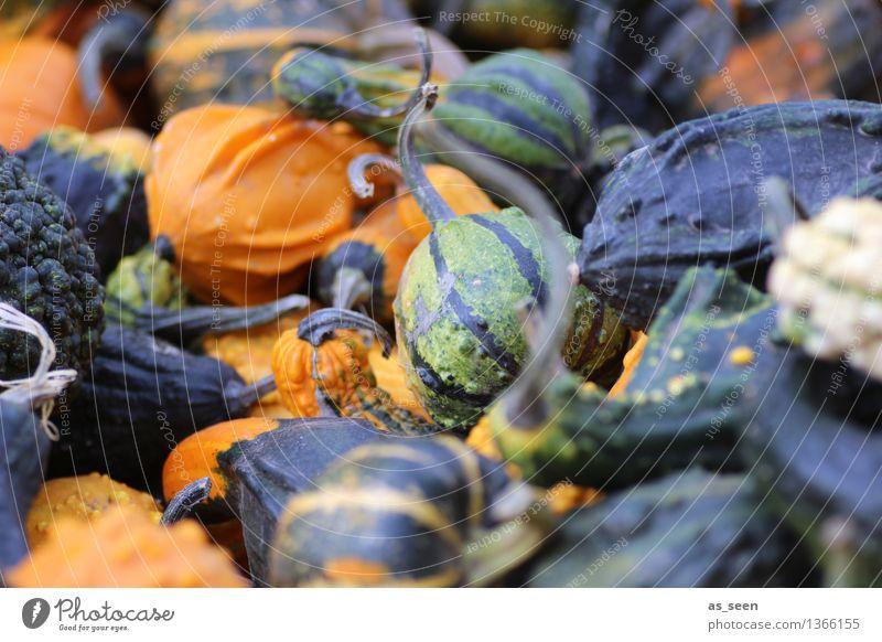 Herbstmarkt Wellness Leben harmonisch Sinnesorgane ruhig Erntedankfest Halloween Umwelt Natur Pflanze Kürbis leuchten liegen Freundlichkeit rund Wärme grün