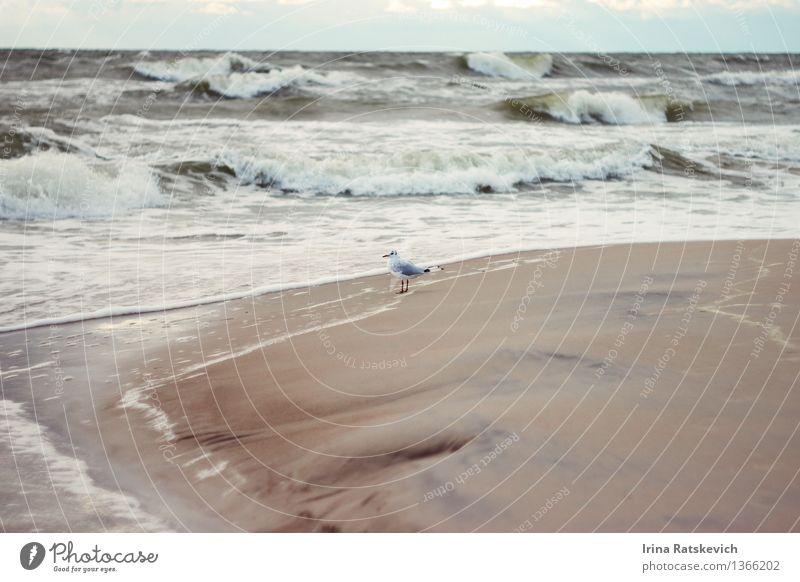 Möwe Himmel Natur schön Wasser Meer Landschaft Tier Strand kalt Herbst Küste Wellen Wind Ostsee Bucht Unwetter