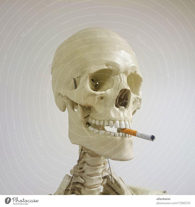 Skelett - Raucher II Gesundheit Rauchen Mensch Körper Kopf Zigarette bedrohlich genießen Zähne Gebiss Schädel Farbfoto Innenaufnahme Detailaufnahme Freisteller
