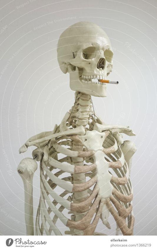 Skelett - Raucher I Gesundheit Rauchen Mensch Körper Kopf Gesicht Zigarette bedrohlich genießen Oberkörper Schädel Farbfoto Innenaufnahme Menschenleer