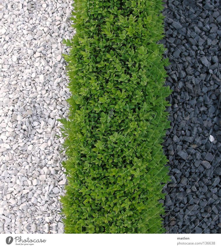 Grenzen Garten Verkehrswege grün schwarz weiß Kies buxbaum Aktien Farbfoto rau
