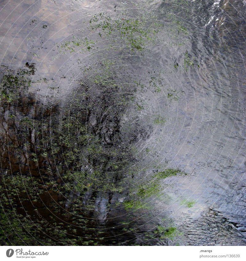 Turbulence nass Algen fließen Flüssigkeit liquide durcheinander Wetter Unwetter dunkel trist Baum Reflexion & Spiegelung Gemälde abstrakt gemalt obskur Wasser