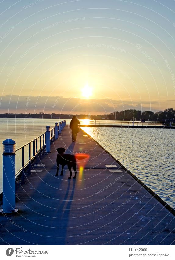 Der Abendhund Mensch Wasser Himmel Sonne Meer blau Ferien & Urlaub & Reisen schwarz gelb Ferne Hund Wege & Pfade See Horizont Steg Geländer