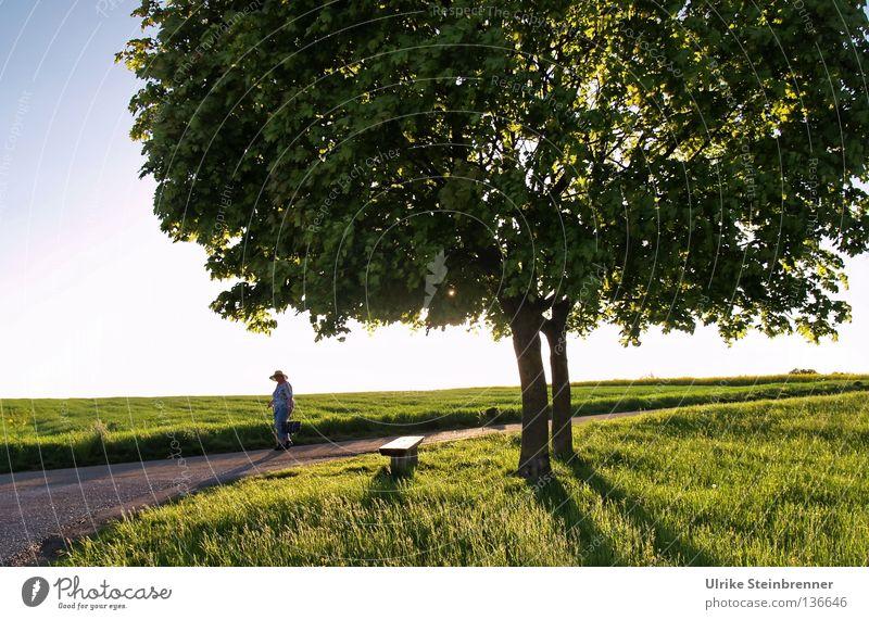 Alte Frau mit Strohhut geht an Baumpaar vorbei Gesundheit wandern 2 Mensch Umwelt Natur Frühling Gras Blatt Wiese Feld Straße Wege & Pfade Hut alt Bewegung