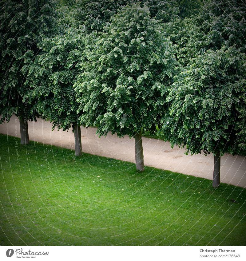 Es geht abwärts. Baum Wald Blatt Baumkrone Gras Halm Wiese Park Ordnung aufräumen Sauberkeit gepflegt Kies Kieselsteine Schotterweg wandern Erholung