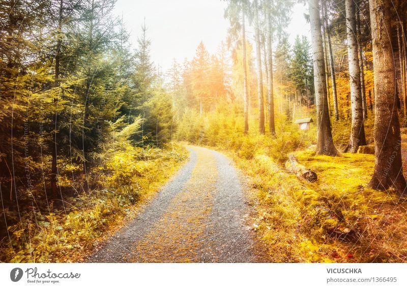 Wunderschöner Herbst Wald im Harz Design Ferien & Urlaub & Reisen Garten Natur Sonnenlicht Schönes Wetter Pflanze Baum Blatt Park weich Hintergrundbild