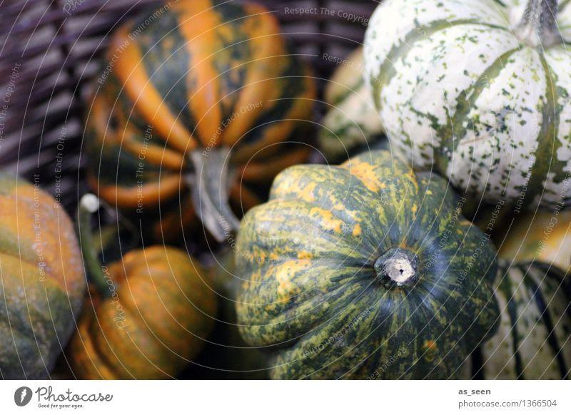 Kürbiskorb Lebensmittel Frucht Ernährung kaufen exotisch harmonisch ruhig Oktoberfest Erntedankfest Halloween Jahrmarkt Landwirtschaft Forstwirtschaft Umwelt
