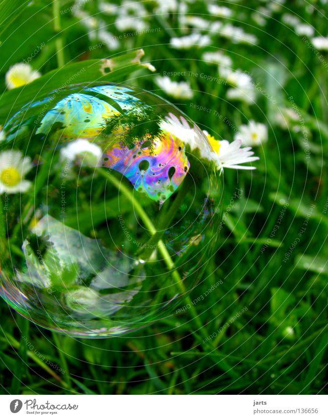 heile welt Wiese Gras Gänseblümchen grün mehrfarbig regenbogenfarben Luft Luftverkehr Siefenblase Blase kleine Welt jarts Farbe