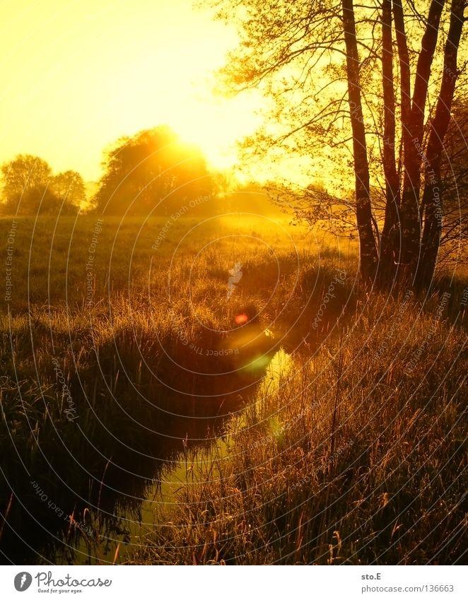 early morning | fließ Himmel Natur grün Baum Sonne Farbe Blatt Wolken ruhig schwarz Landschaft Ferne gelb Wiese Graffiti Wege & Pfade