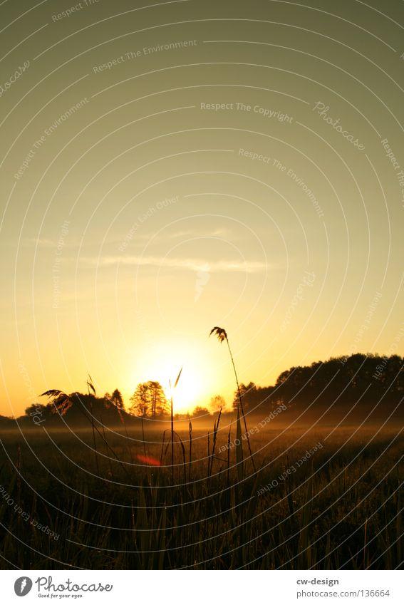 WE WERE EARLY ASTIR Feld Wiese Nebel Regenschirm Sonnenschirm Mann Gras Grasbüschel Baum Wald Morgen Tau Wassertropfen Schweben rot weiß Halm Pflanze feucht