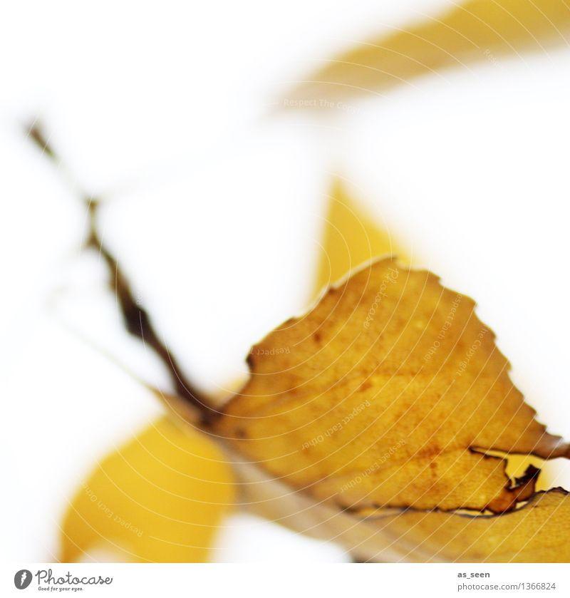 Fallin´ leaves harmonisch Erntedankfest Kunst Umwelt Natur Pflanze Herbst Blatt Garten Park fliegen ästhetisch hell natürlich trocken braun gelb Gefühle