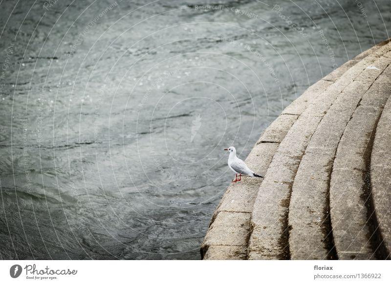 Die Möwe und der Rhein Natur Ferien & Urlaub & Reisen Stadt Wasser weiß Tier Ferne dunkel Umwelt Liebe grau Vogel Stimmung Tourismus Wildtier sitzen