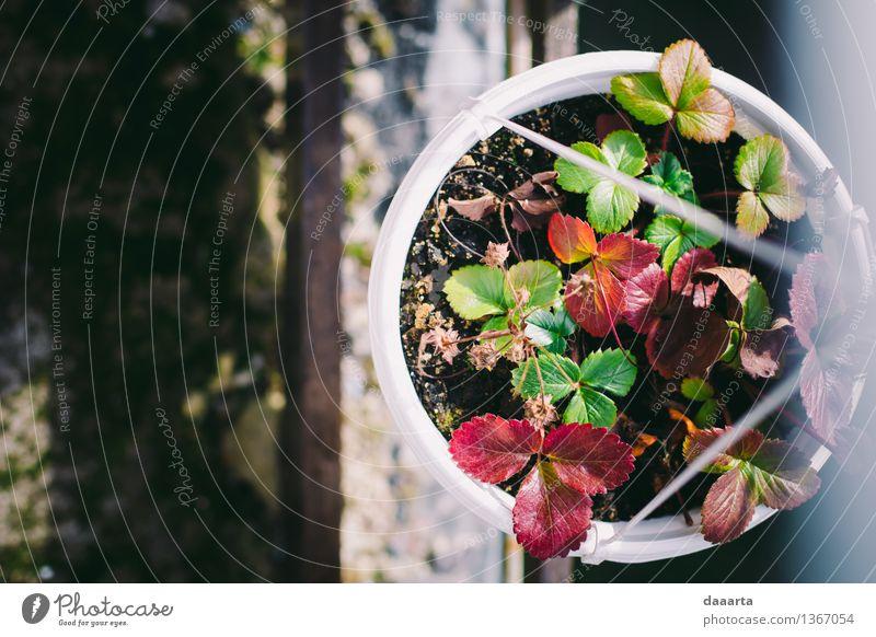 Erdbeertopf Natur Pflanze schön Blume Freude Leben Herbst Gras feminin Stil Spielen Lifestyle Garten Feste & Feiern Stimmung Design